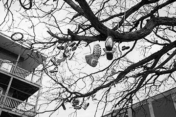 Shoe Tree, South Holyoke, Frank Ward 2009