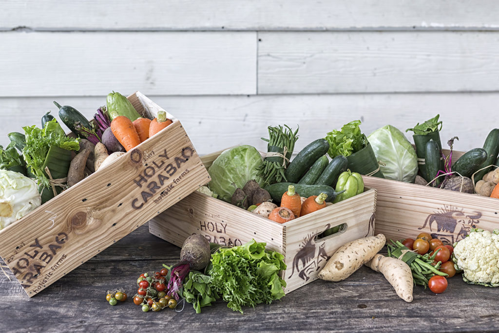 An assortment of produce from Holy Carabao Farm such as beets, cherry tomatoes, carrots, potatoes, andcucumbers
