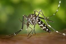 Attention : Moustiques tigres dans le 82