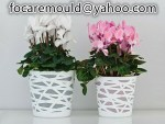 two color planter mold