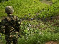 Cultivos de Coca, Narcotráfico y Paz Territorial