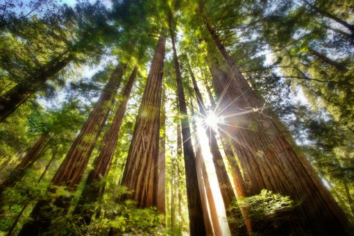 Image result for muir woods nature photography