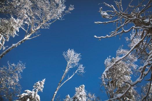 focus-aventure-chartreuse-foret-hiver-la-pinea