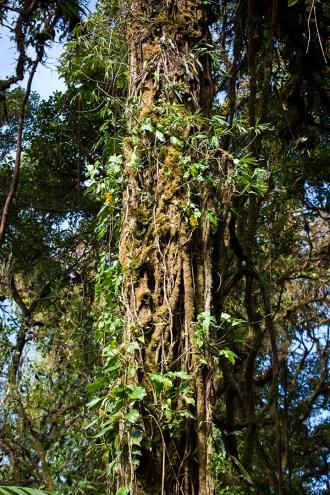 costa-rica-focus-aventure-julia-lt-monteverde-paysage-jungle