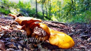 """""""Micro Mushroom 1"""" taken by Rachel Cancino-Neill in Erbie, Arkansas: 2015"""