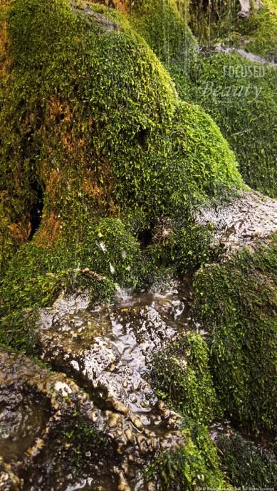 """Growth by Water"" by Rachel Cancino-Neill taken on Buffalo River Trail, AR:2015"