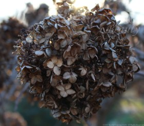 """""""Leaf Bunches"""" by Rachel Cancino-Neill"""