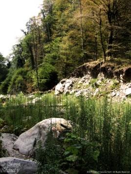 """Rocky Beauty"" by Rachel Cancino-Neill taken near the Caucus Mountains in Georgia: 2015"