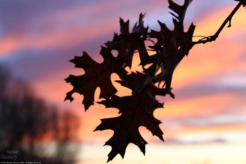 """Royal Morning 2"" by Rachel Cancino-Neill"