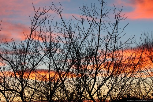 """Royal Morning 4"" by Rachel Cancino-Neill"