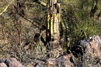 Tree, Rock, Cactus