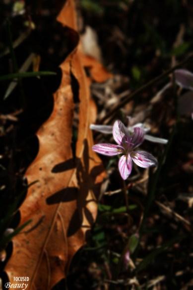 A Flower's Shadow on a Leaf