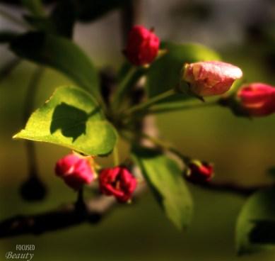 A Tree Flower's Shadow on Leaf