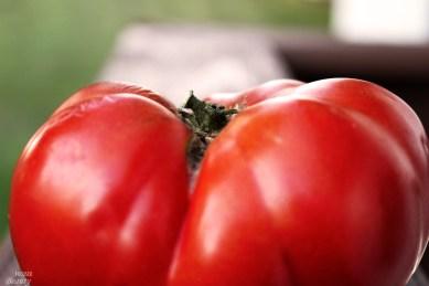Heirloom Tomato 8