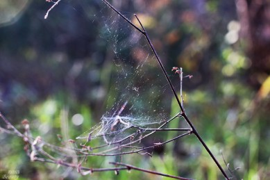 a-spiders-web