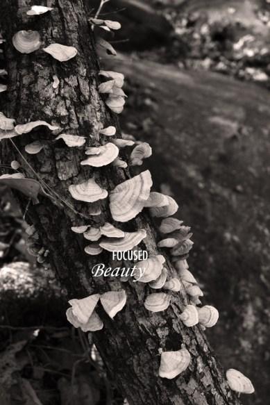 monotone-mushrooms-on-tree
