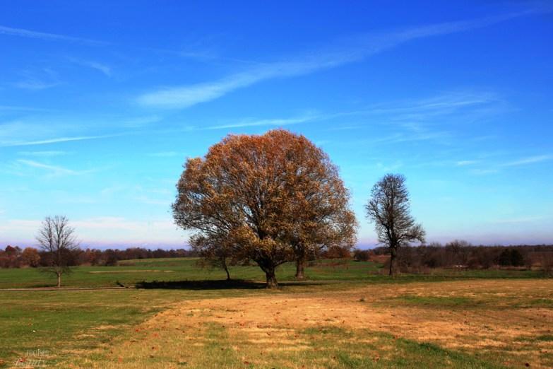 family-farm-tree