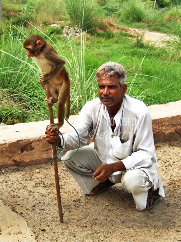 the-man-teaching-his-monkey-tricks
