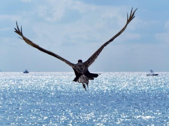 Freedom! A Turkey-Vulture's Grandeur