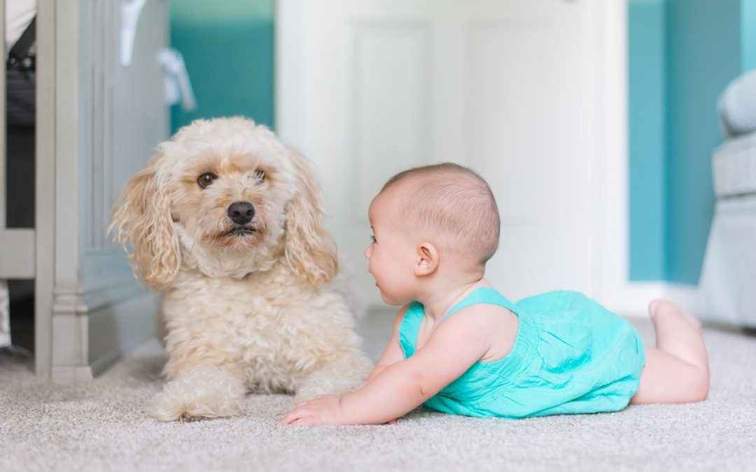 Your Dog And Your Baby