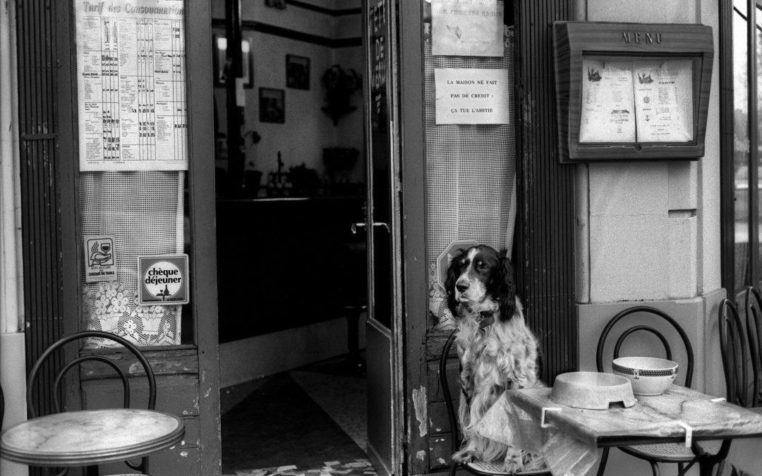 dog at cafe