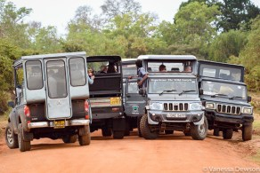 Another traffic jam to see a leopard