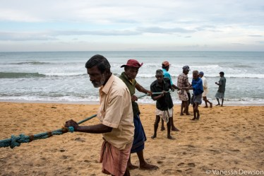 Bringing in the nets on the other side of Wadduwa Beach, Sri Lanka
