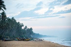 Fishing Boats on Wadduwa Beach, Sri Lanka