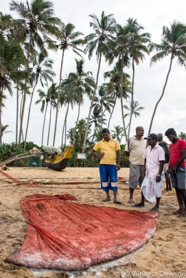 The day's catch. Wadduwa Beach, Sri Lanka