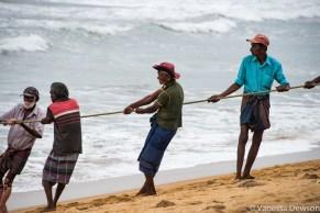 Bringing in the fishing nets, Wadduwa Beach, Sri Lanka
