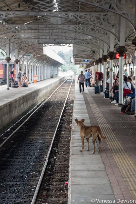 The station watch dog, Kandy, Sri Lanka