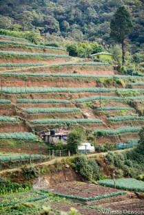 Terraced farm, Sri Lanka
