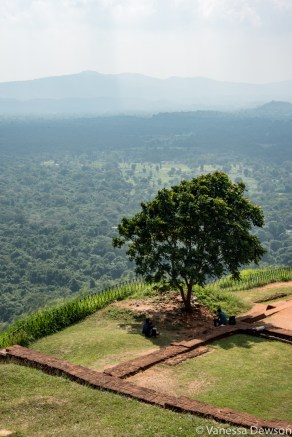 View from the top of Sirigiya, Sri Lanka