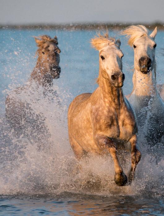 France: Horses & Wine Photo Tour – Day 3