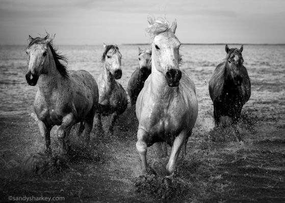 Sandy's take in black and white. Photo by: Sandy Sharkey
