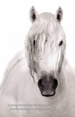 Beautiful horse portrait by Tammy Beveridge.