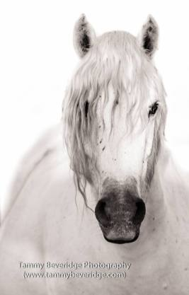 Beautiful horse portrait by Tammy Beveridge.