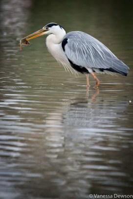 Morning catch. Photo by: Vanessa Dewson