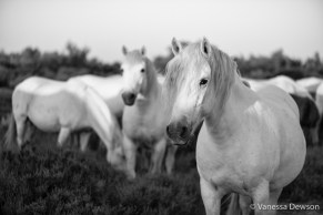 Loved the mane on this one. Photo by: Vanessa Dewson