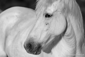 Horse in Sweet light. Photo by: Vanessa Dewson