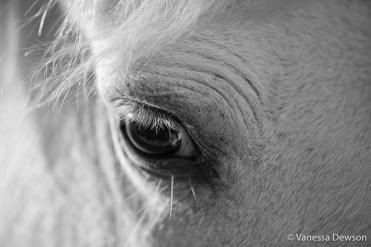 Close up. Photo by: Vanessa Dewson