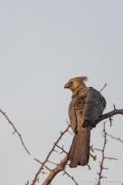 Goway Bird
