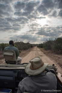 Another day, another game drive