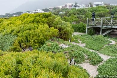 Penguin Boardwalk