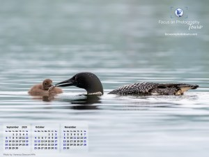 Loon feeding loonlet. Wallpaper calender for September to November 2020. Dimensions: 1600 x 1200.