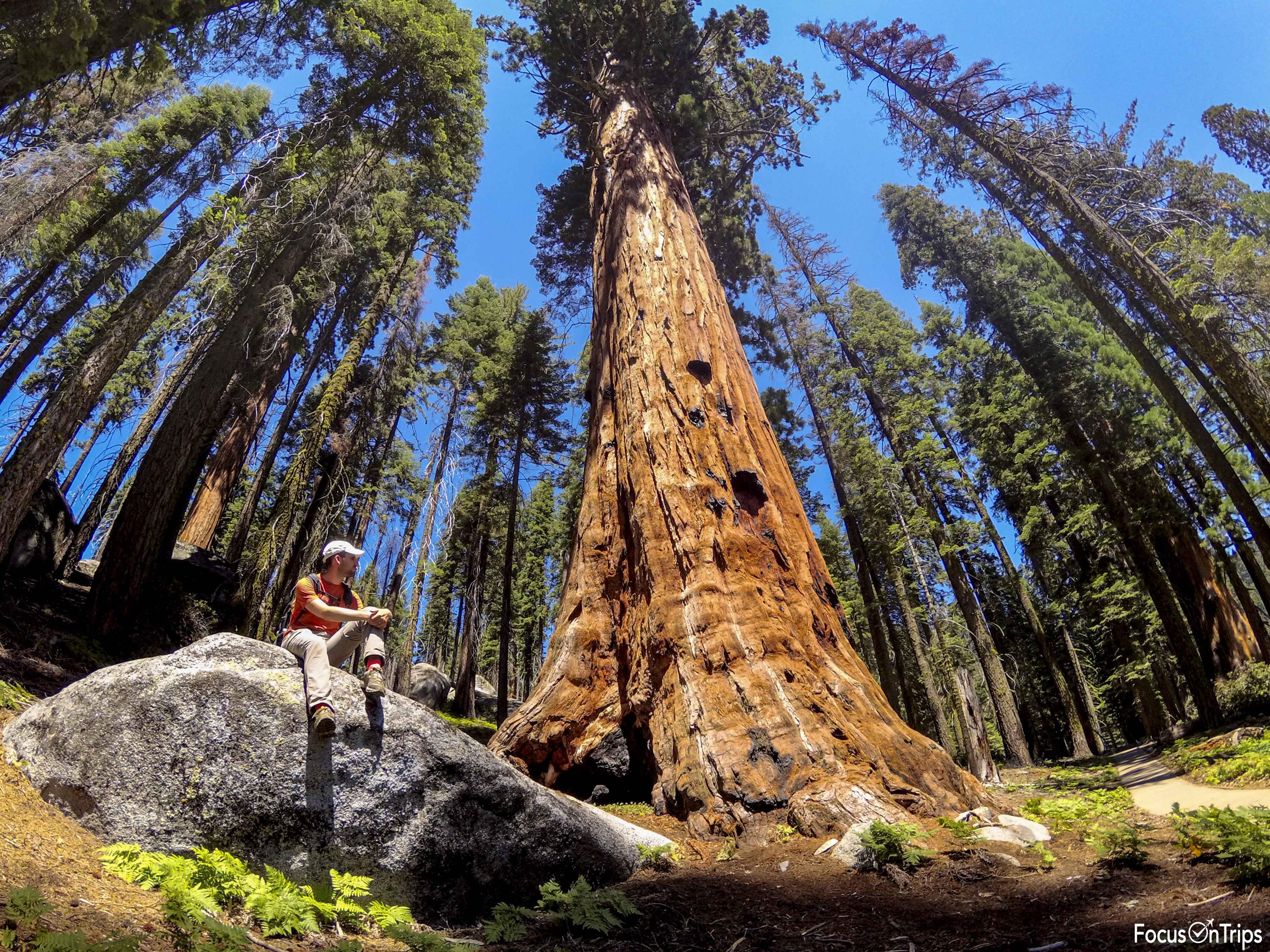 Sequoia National Park viaggio USA ovest
