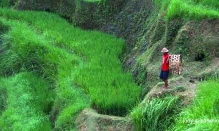 Early Harvest: The Bali Package