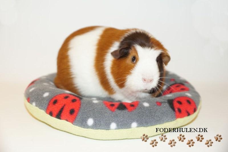 PiggyDonut - Foderhulen.dk
