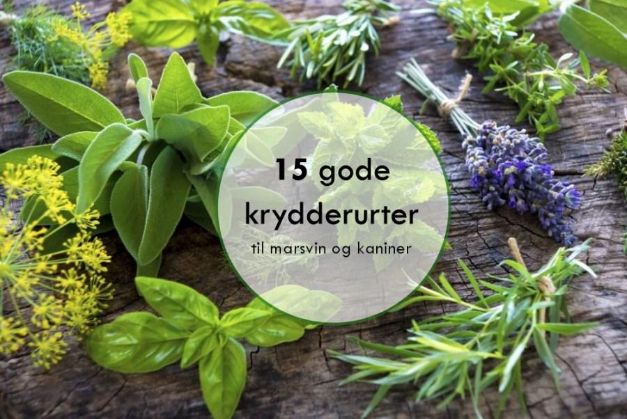 15 gode krydderurter til marsvin og kaniner - Foderhulen.dk