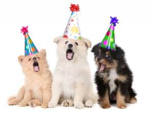 sjove fødselsdagscitater